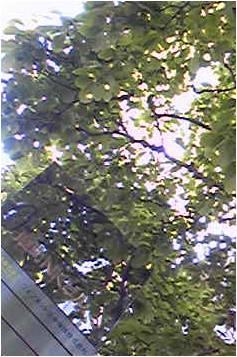 090427.JPG